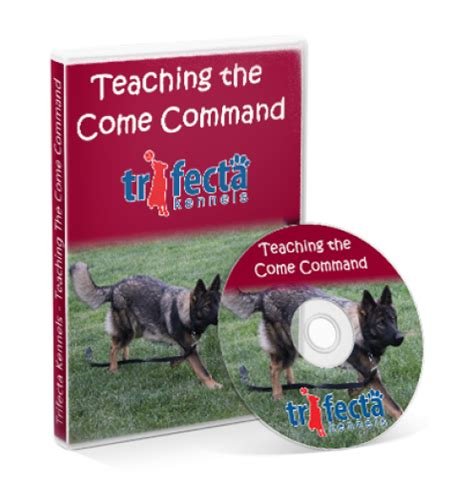 teaching puppy to come teach your to come when called available may 21 trifecta kennels