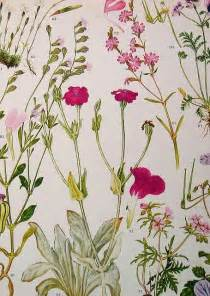 507 best images about botanical art on pinterest