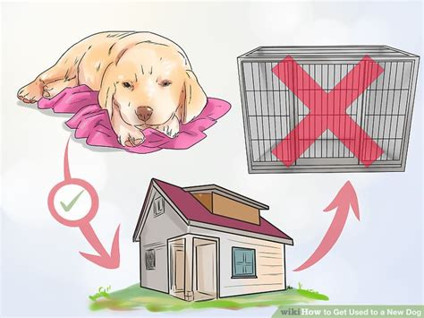 how to get a dog to use the bathroom outside 3 ways to get used to a new dog wikihow