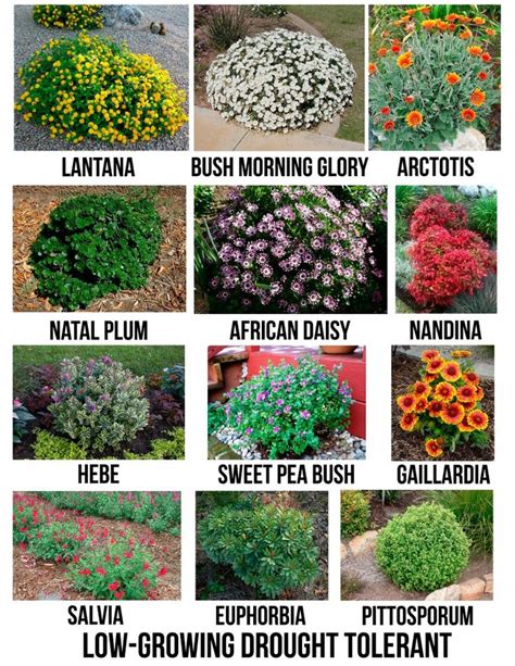 common landscaping plants 25 best ideas about shrubs on landscaping