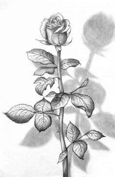 1000 ide tentang mawar di mawar merah muda tanaman semak dan bunga