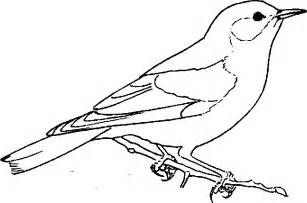 birds to color bird coloring pages
