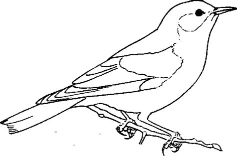 free coloring book pages birds bird coloring pages