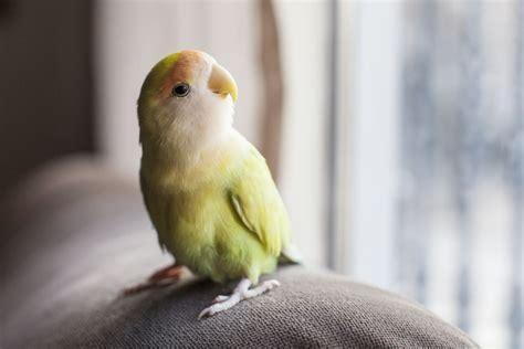 choose mist humidifiers  birds