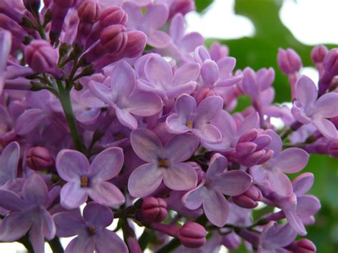 fiori diario di una scrittrice in miniatura