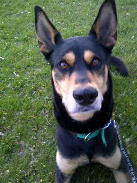 his name was my with a remarkable doberman pinscher books doberman husky mix and master of the goofball domain