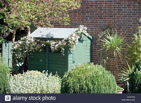 Against A Brick Wall garden shed covered by a clematis against a brick wall