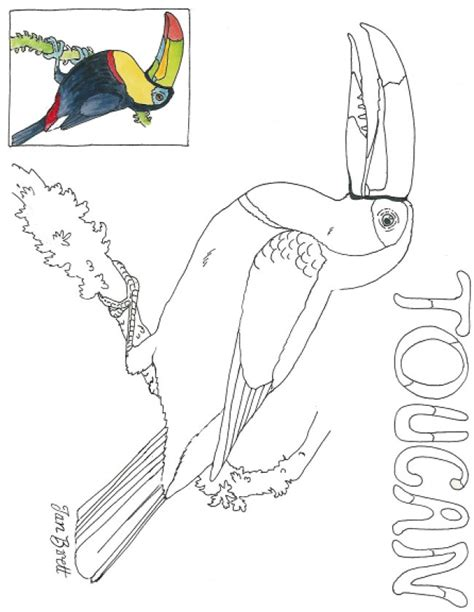 coloring page of a toucan bird cloud forest toucan coloring page