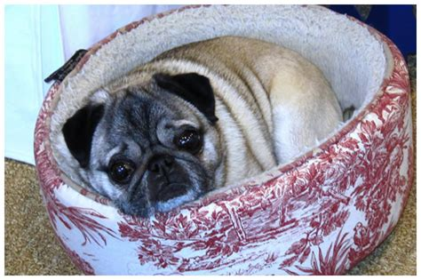 bob the pug residential gallery gambrel and