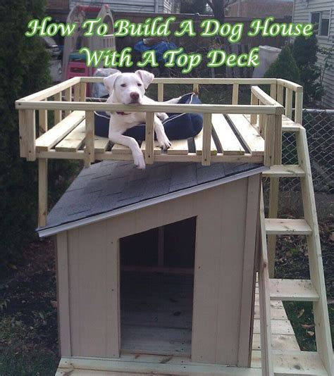 most popular house dogs how to build a dog house with top deck most popular pins litle pups