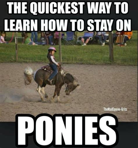 Funny Pony Memes - best 25 how to ride a horse ideas on pinterest