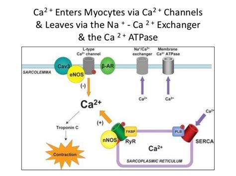 Failings Of Mba Structure by Image Gallery Myosin Atpase