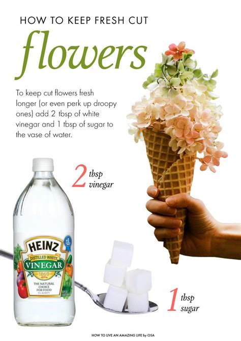 cut flowers food 76693 best flowers and gardening images on pinterest