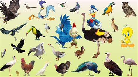 lear animals birds names and sounds for children real