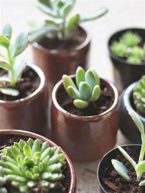 repot succulents world  succulents