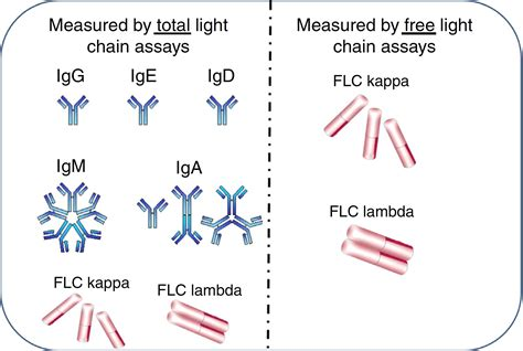 kappa and lambda light chains living with quot abnormal quot free light chain ratios the