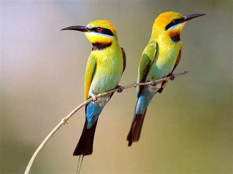 birds beautiful nature wallpaper 23445747 fanpop
