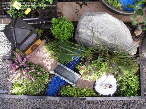 mini japanese garden specialty gardening miniature japanese garden 1 by
