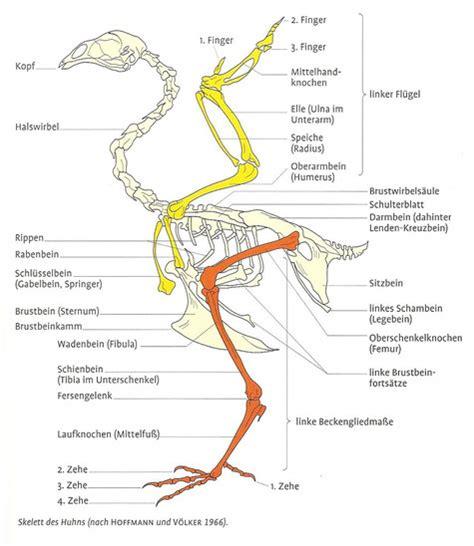 Beschriftung Huhn by Anatomie Des Gefl 252 Gels Lachshuhnzucht Herne