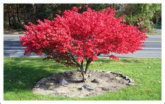 yard trees on traditional landscape fast