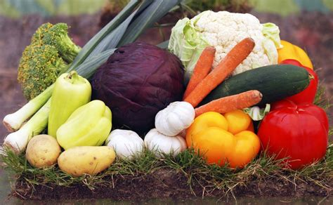 Vegetables To Plant In Fall For A Fresh Winter What To Plant In Winter Vegetable Garden