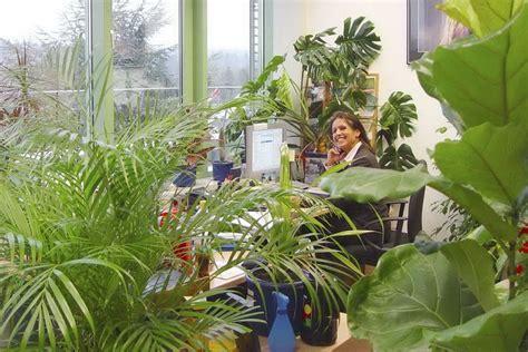 Gro E Pflanzen Kaufen 83 by Wohnzimmer Pflanzen Kaufen Wohnzimmer Pflanzen Luxus