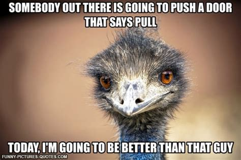 Ostrich Memes - ostrich funny image quotes quotesgram