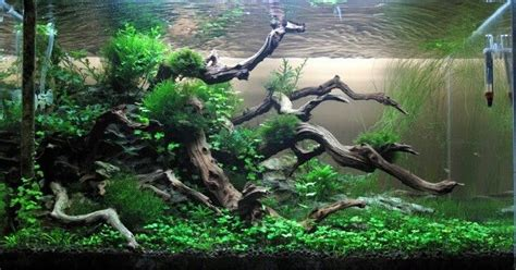 Driftwood Aquascape by Mounted Driftwood Aquarium Decorations Items In Aquarium