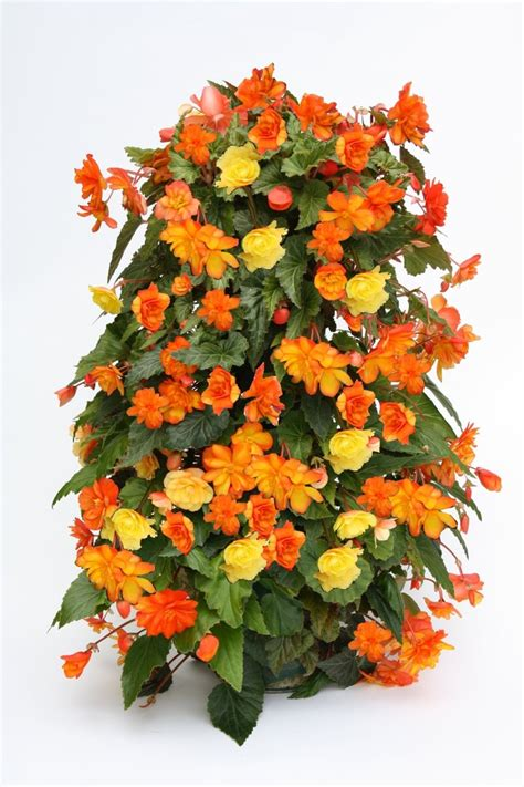 Flower Tower Freestanding Planter by 17 Best Images About Flower Towers On Happenings Cabbages And