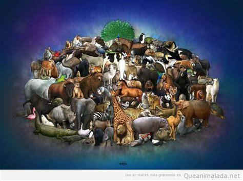 imagenes de animales varios el arca de no 233 161 precioso