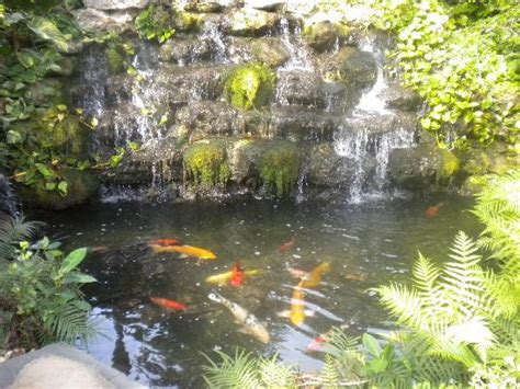 Backyard Guest Room Koi Pond And Waterfall In The Garden Picture Of Almond