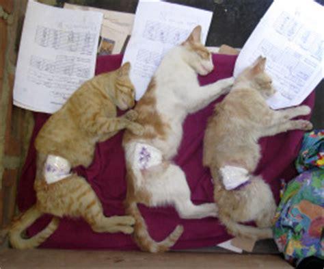 neutering recovery vets in peru humane society international