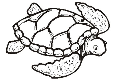 simple turtle coloring page simple sea turtle drawing coloring pages of sea turtles