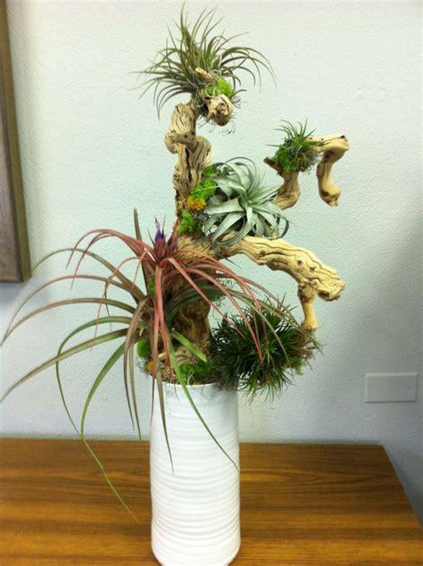 indoor plant arrangements 75 best images about plant arrangements on pinterest