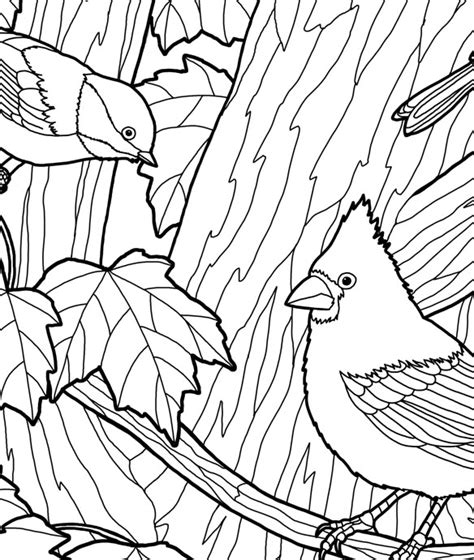 coloring pages of birds in trees a bird in the nest coloring page coloring pages of birds