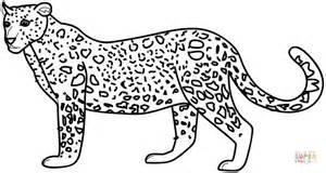 ausmalbild leopard ausmalbilder kostenlos zum ausdrucken