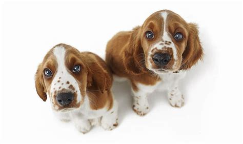 how until puppies open ten things you never knew about puppies top 10 facts style express co uk