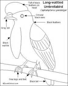 umbrellabird printout enchantedlearning com