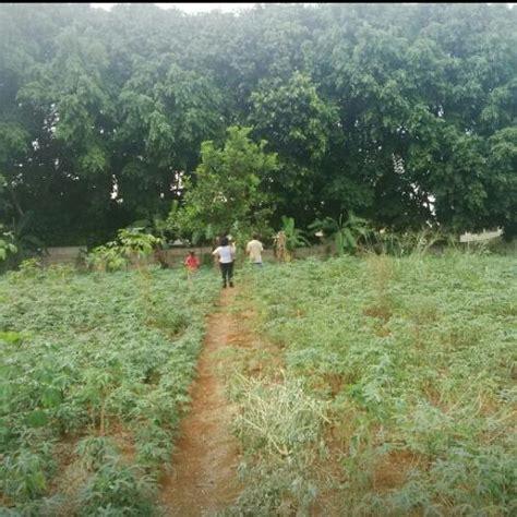 Bed Murah Di Bogor harga tanah di parung bogor jual tanah tanah disewakan