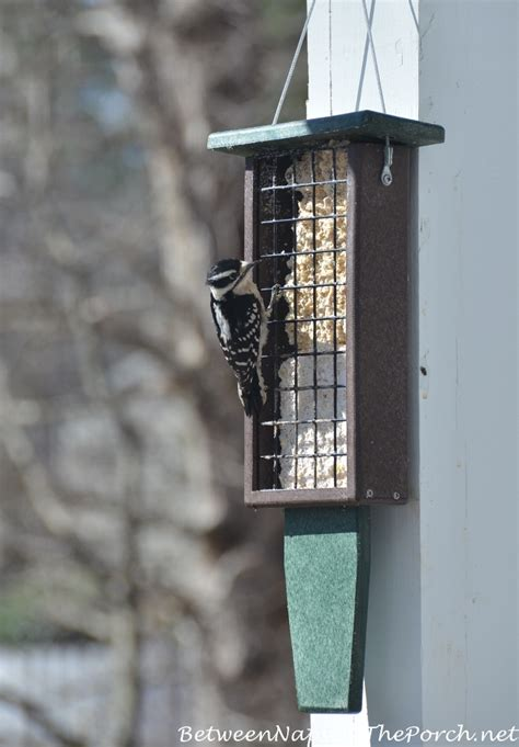 best suet feeder for pileated woodpeckers