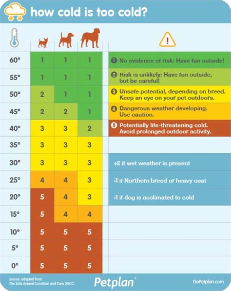 house temperature for dogs in winter do dogs need blankets in winter here s how to keep dogs warm