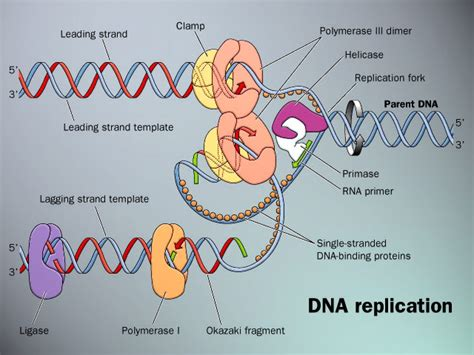 All Systems Go For Tuesday Dna Reveal by Ellisbiology Week 8 Dna Replication