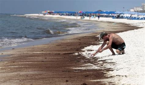 Gibraltar 1998 Marine Enviroment Ms study tar balls found in gulf teeming with flesh