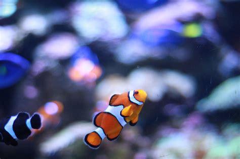 lade per acquario acqua dolce come allestire un acquario marino o di acqua dolce