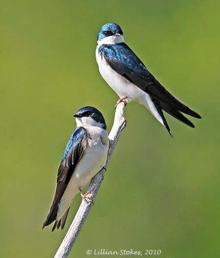 spring backyard birds flashcards  proprofs