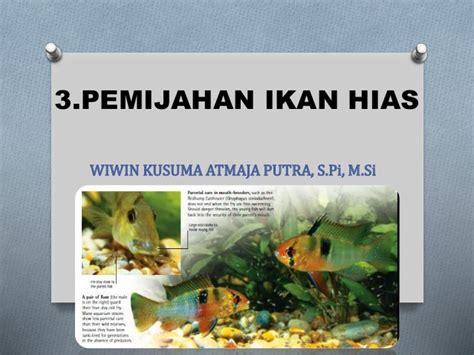 Pakan Untuk Ikan Hias Air Laut 3 pemijahan 4 pakan dan manajemen kualitas air ikan hias