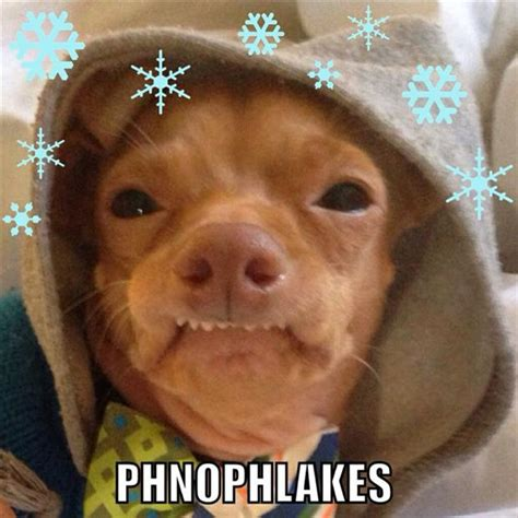 Dog With Overbite Meme - image gallery phteven starbucks