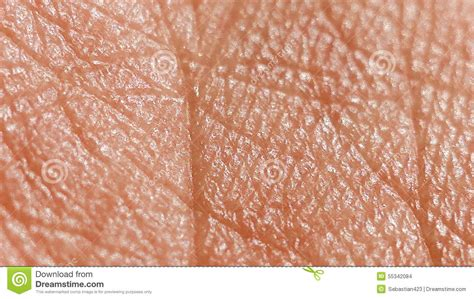 human skin royalty free stock photography cartoondealer 28539899 human skin royalty free stock photography cartoondealer 28539899