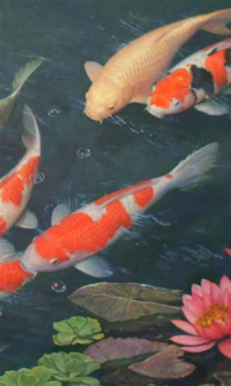 cool koi fish live wallpaper free android live wallpaper download download the free cool koi