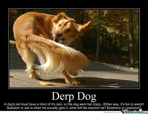 Derp Dog Meme - derp dog by isleyofthenorth meme center